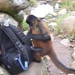 El mono robandonos