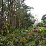 Area de plantas