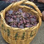Fruto de la pesca, montonal de cangrejos