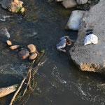Hombre pescando en Girón