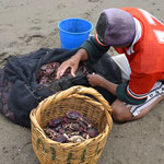 Pescador en Huanchaco