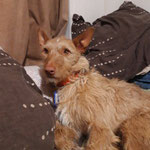 Piru adopté par Clothilde L. (56)