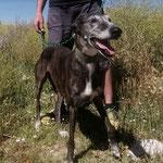 Kawi adoptée par Marion DA. (24)