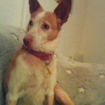 Tutty adoptée par Nadine A. (09)