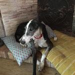 Limbo adopté par Laura S. (36)