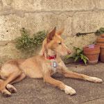 Yaro adopté par Laure F. (16)