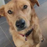 Molly adoptée par Christine LF. (17)