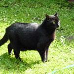 Tierärztlich bescheinigt: Das ist eine kleine, grazile Katze! JAWOLL!