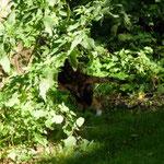 Winnie kratzt am Katzenausguck.