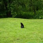 Kleine Katze im großen Grün.