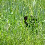 Suchbild: Wo ist die Katz?