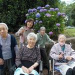 太平山 紫陽花