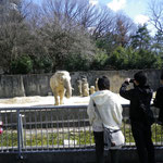 東山動物園  23年度3月卒業旅行