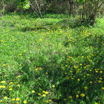 Wildkräutergarten Frühling
