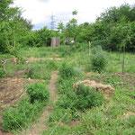 Wildkräuter Garten
