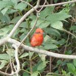 Vogelbeobachtungen - im Regenwald oder im Nebelwald?