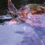 Kreuzfahrten auf den Galápagos inseln