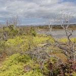 Der Nationalpark Galápagos schützt die bedrohte Tier- und Pflanzenwelt