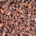 Der qualitativ hochwertigste Kakao kommt aus Ecuador