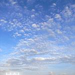 綺麗~♪ 巻積雲かな。