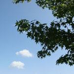 葉っぱと雲