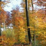 Herbstwald bei Ettlingen