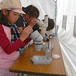 顕微鏡で生きもの観察 ミジンコが見えたかな