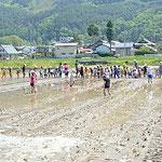 100人の子どもたちがどろんこになって田植えに挑戦