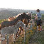 les animaux : 4 chevaux, 2 ânes , devant vous
