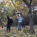 Baumpflege 11/2018, Foto: NABU Ellwangen/Angelika Benninger