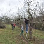 Baumpflege 2018, Foto: NABU Ellwangen/Angelika Benninger