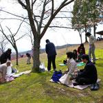 桜の木下でお昼ごはん