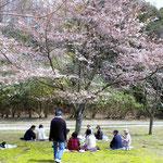 当日は桜は七分咲きくらいでした