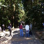 神服織機殿神社境内の参道