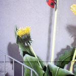 Nahaufnahme der Blume und ihren grünen Blättern