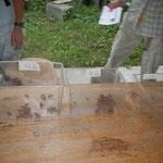 脱け殻の採取場所(裏山、校庭、河川敷の雑木林)ごとに脱け殻を分けて、これから種類分けです。