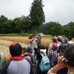 麦を見ながら昔の麦の栽培の苦労話などをききました。