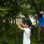 木の枝に付いてる抜け殻をゲット