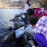 湖畔は波の水しぶきで氷柱が出来ていました。