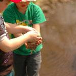ニホンアカガエルの卵塊の感触を手に取って体験。