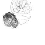 林真理子『お父ちゃんのこと』1-1 小説現代(講談社) 2012