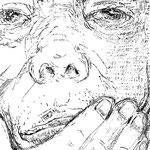 桐野夏生「猿の見る夢」37-2 週刊現代(講談社) 2014