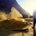 Winnowing - most agricultural tasks are done by hand