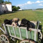 Ausflug im Bollerwagen