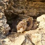 Kestrel, Cyprus, Nata, 30.05.11, Canon 1D MK IV, EF 500 f4 L IS USM + TC1,4 II