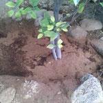 Polvillo de coco, fibra de coco, sustrato de coco
