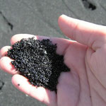 http://www.hawaiipictureoftheday.com/punaluu-black-sand-beach/