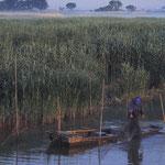 魚を捕る伝統的な長袋を引き上げる漁師