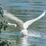 take off: Aarau Philosophenweg