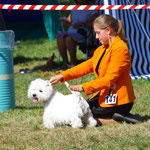 Mit Leda (West Highland White Terrier) im Ring, Eiken CH 2015